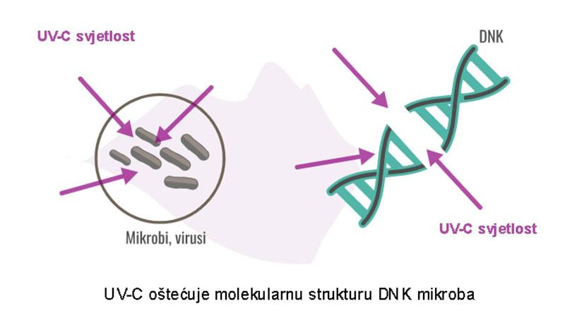 Kako djeluje UV-C dezinfekcija